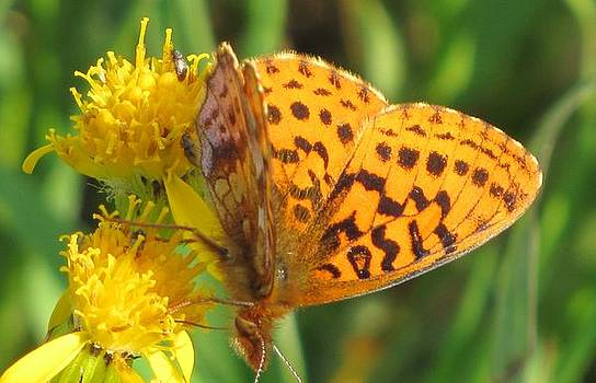 Butterfly on the Flower inspired by Vladimir Nabokov by Barbara Chachibaya