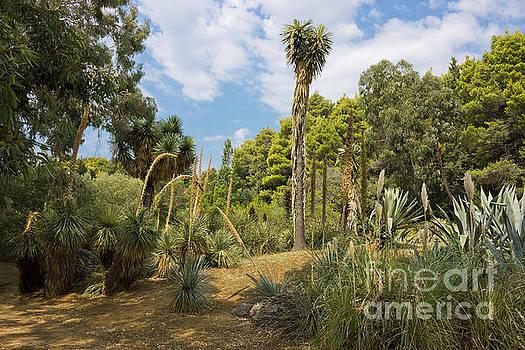 Cactus Plants Landscape by Kiril Stanchev