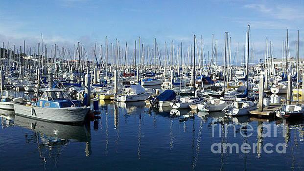 California Sails by Lynn Jackson