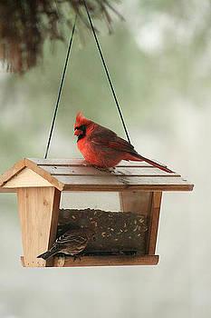 Cardinal in the Winter by Kelly Frye