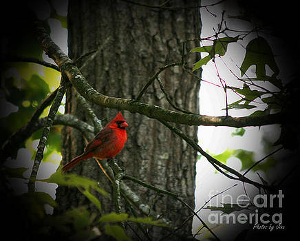 Cardinal Love.. by Jinx Farmer