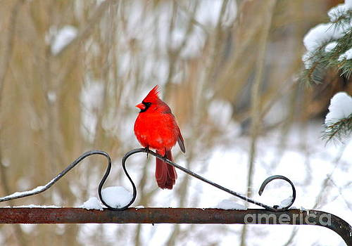 Cardinal on the Gate by Jay Nodianos