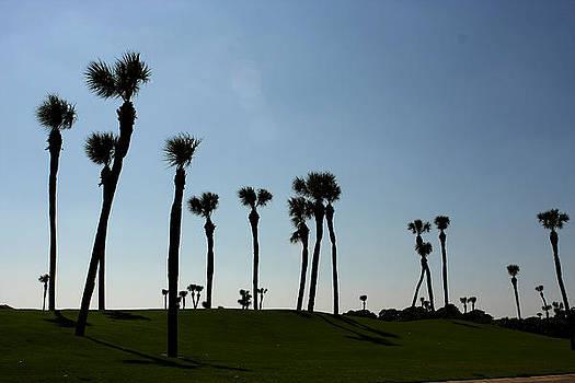 Carolina Golf by David Paul Murray