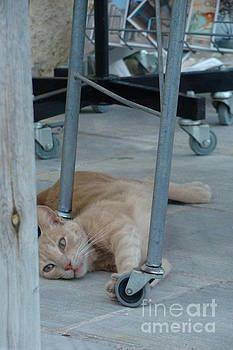 Cat resting by Paraskevas Momos
