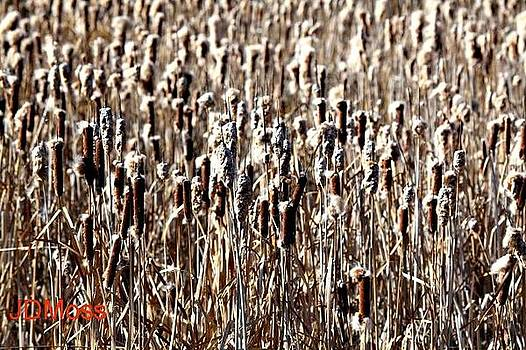 Cattails by Janet Moss