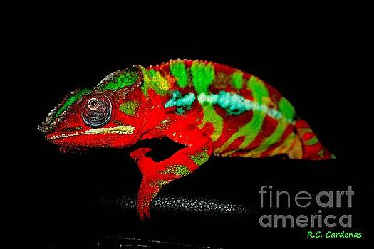 Chameleon Power by Rebecca Christine Cardenas