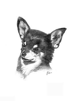 Chihuahua by Lou Ortiz