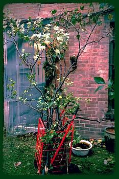 Christopher's Garden by Peri Lyons
