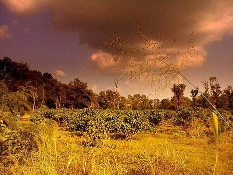 Clouds by Salman Ravish