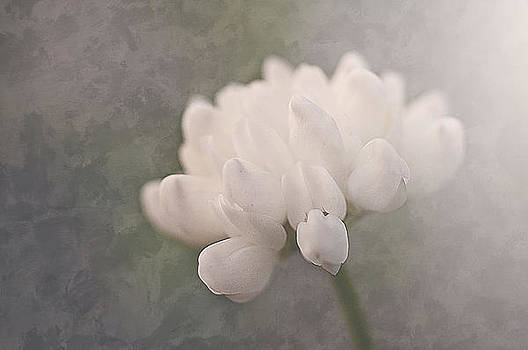 Clover in White by Faith Simbeck