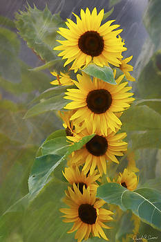 Cluster of Sunflowers by David Simons