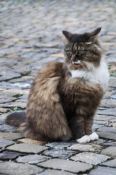 Cobblestone Cat by Sharon Sefton