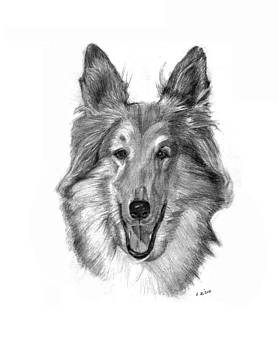 Collie by Lou Ortiz