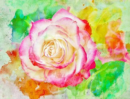 Color and Rose by Cathie Tyler
