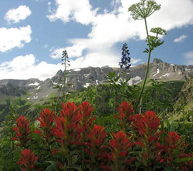 Colorado Wildflowers by Robert Lozen