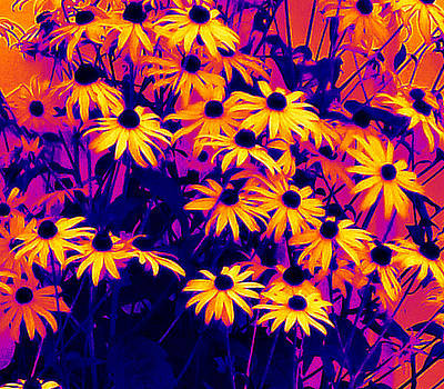 Colorful Flowers by Michael Sokalski