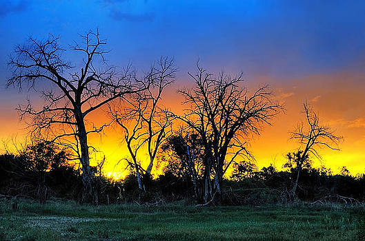 Colorful Sunset and Trees by Steve Barge