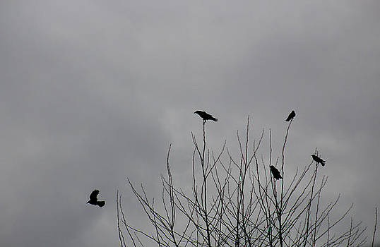 Crows Around by Serdar Andonyan