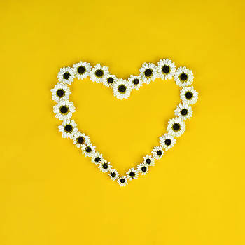 Daisy Heart by