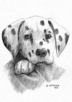 Dalmatian Puppy by Al Intindola