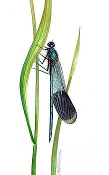 Damselfly by Barbara Anna Cichocka