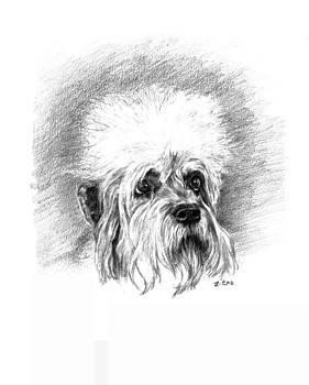 Dandie Dinmont Terrier by Lou Ortiz