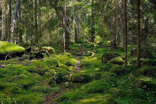 Dark forest by Tage Persson