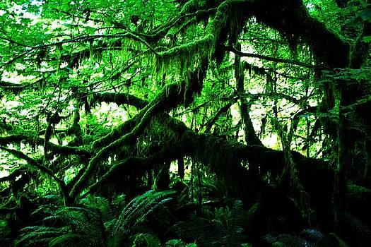 Dark Moss by Daniel Rooney