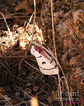 Desert Moth by Rebecca Christine Cardenas
