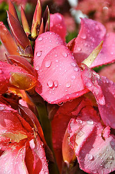 Dew Drops  by Catherine Renzini