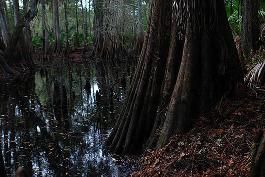 Dolphin Creek 01 by Carol Kay