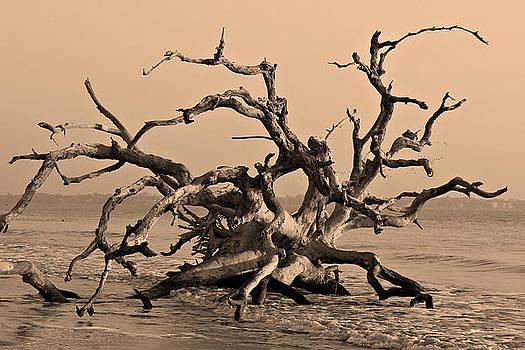 Driftwood Beach Jekyll Island by Leslie Kirk