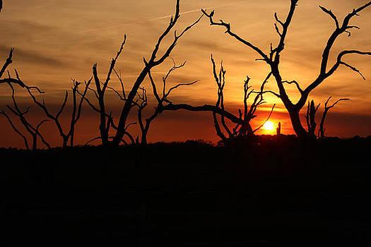 Driftwood Sunset by David Paul Murray