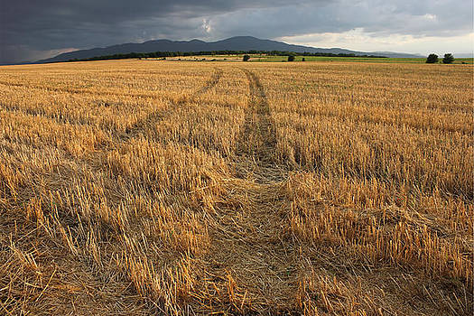 Dry Field Road in the Countryside by Kiril Stanchev