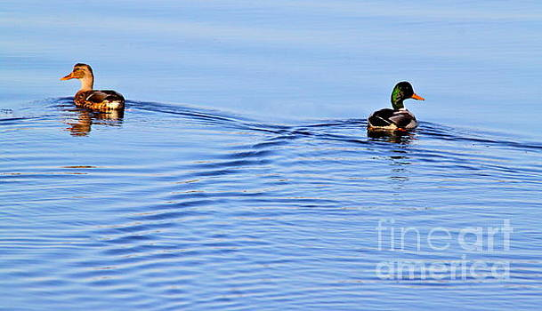 Duck Duck by Jay Nodianos