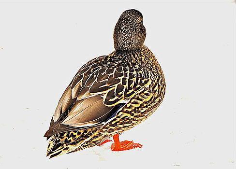 Duck Portrait by Catherine Renzini