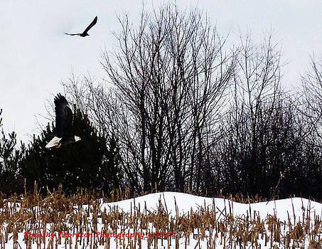 Eagles by Timothy Thornton