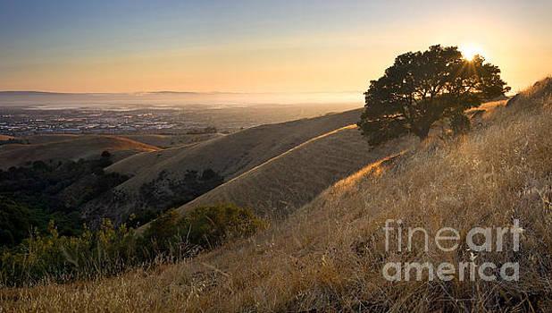 East Bay Hills in Summer by Matt Tilghman