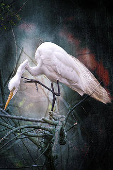 Egret at Avery Island by Bonnie Barry