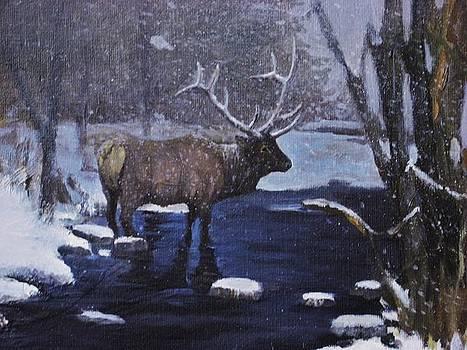 Elk In The Wilderness by Noe Peralez