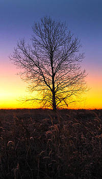 Ellis Island Lone Tree by David Yunker