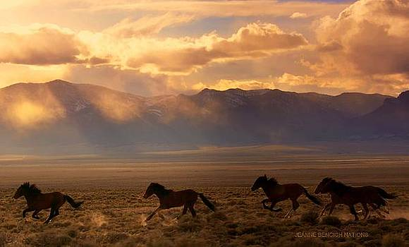 Elusive Wild And Free Mustangs by Jeanne  Bencich-Nations