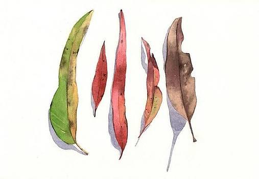Eucaliptus Magic by Ally Keller