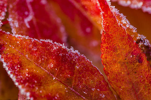 Fall Frost by Kaye Seaboch