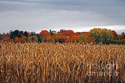 Fall in the country by Kathy DesJardins