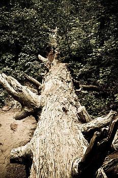 Fallen Tree by Kenny Jalet