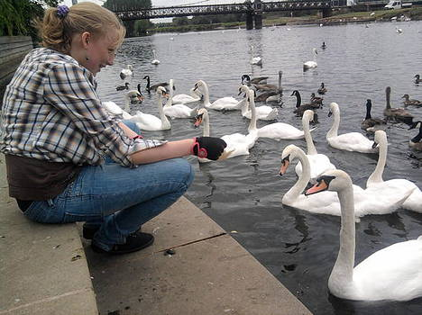 Feeding the swans by Geoff Cooper