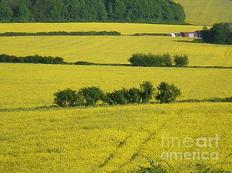Fields Of Yellow by Ann Fellows