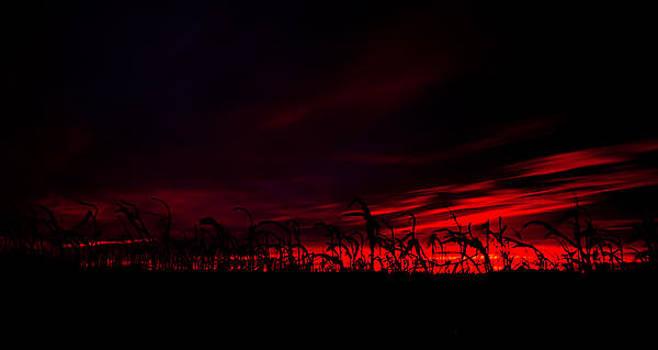 Fiery Corn by Craig Brown