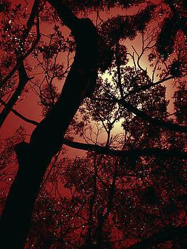 Fiery by Elisabeth Dubois